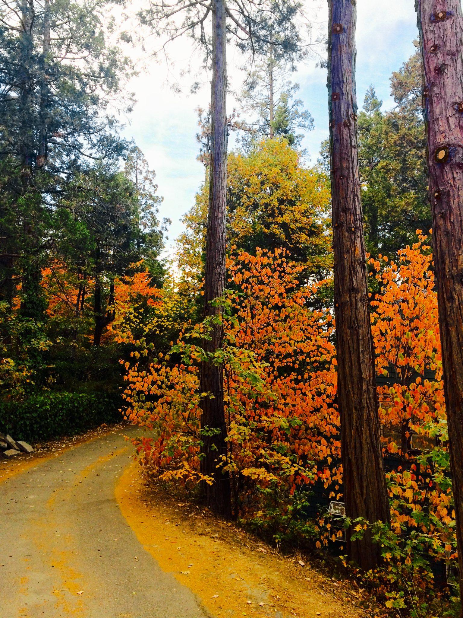 Fall in Lake Arrowhead